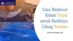 Cara Membuat Kolam Terpal Bioflok untuk Budidaya Udang Vaname