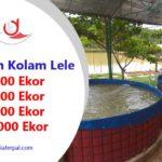 Ukuran Kolam Lele untuk 1000 Ekor, 2000 Ekor, 5000 Ekor, dan 10000 Ekor